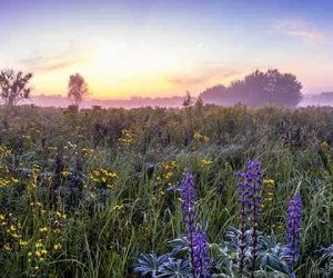 flowers in a field with the sun rising in the background